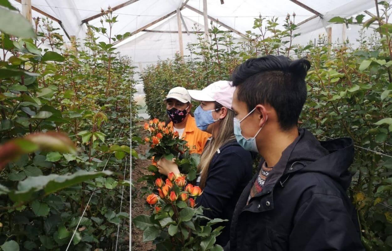 Mini rose growing tour img 011