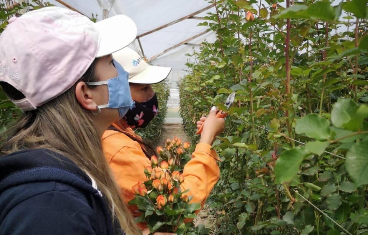 Tour cultivo de rosas bogotapass img 01