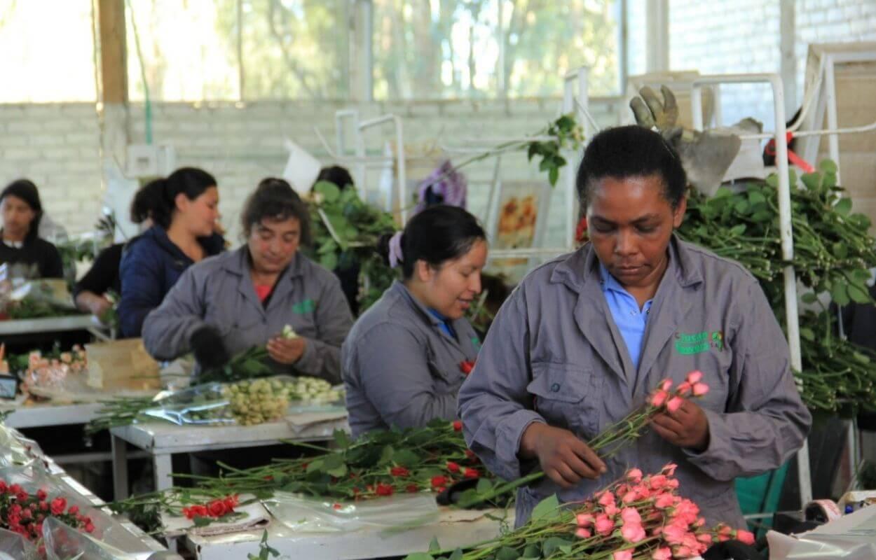 Tour cultivo de rosas bogotapass img 05